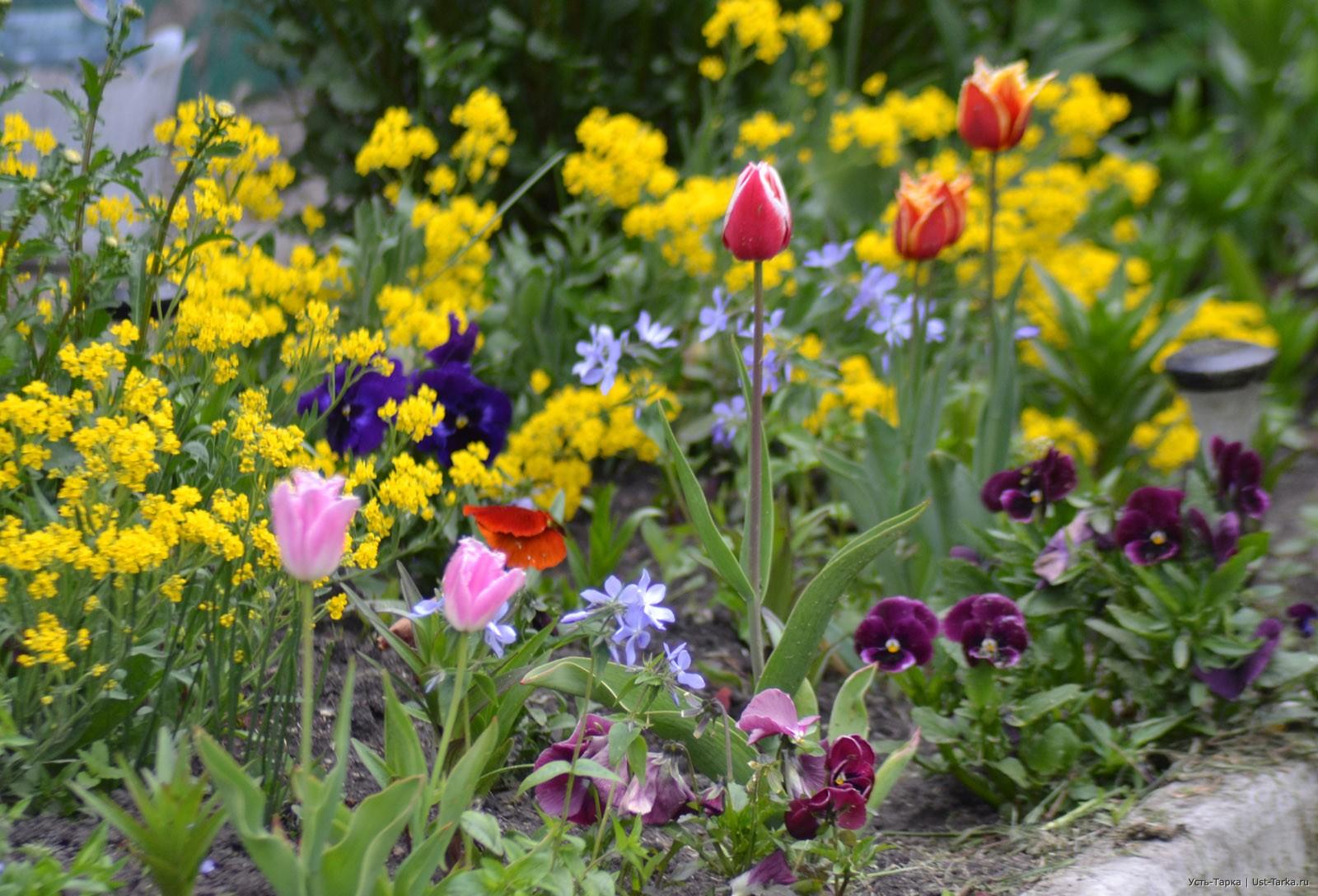 Цветы многолетники которые все лето цветут