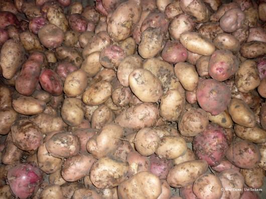Почём картошечка?