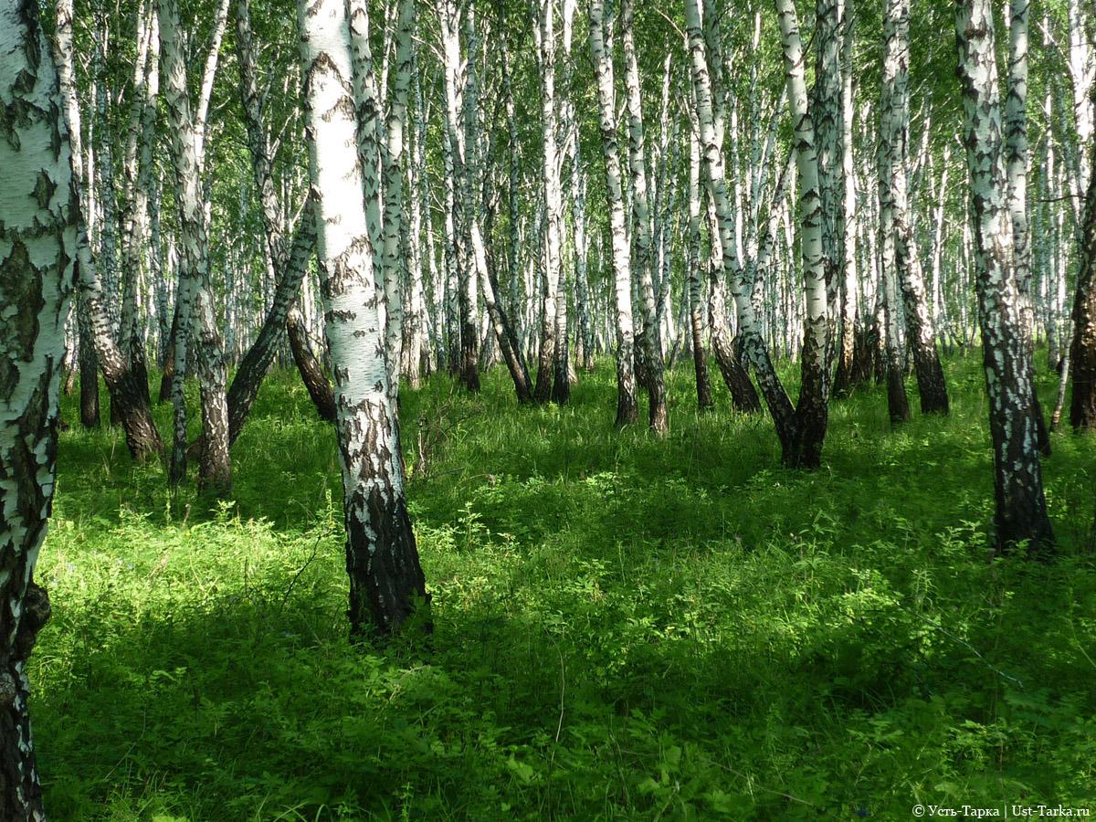 Фото лес и поле