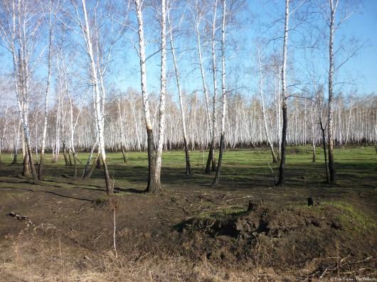 Лес восстанавливается