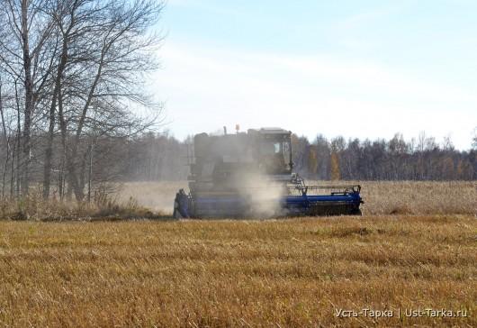 Уборка последних гектаров пшеницы