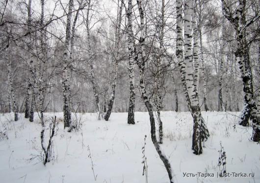 Заметает зима, заметает…